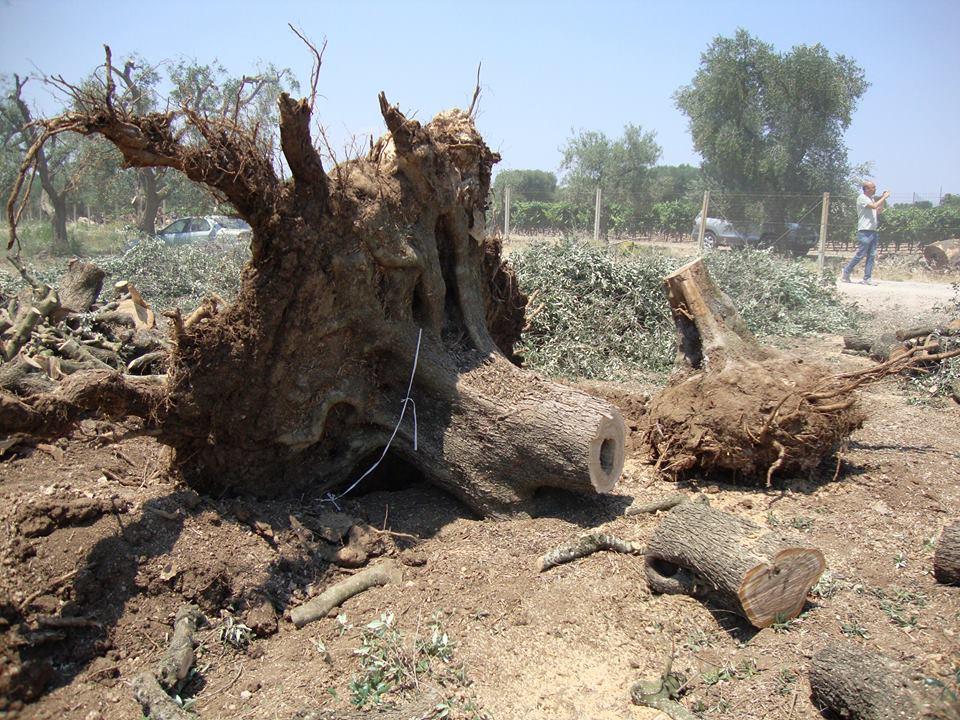 alberi_devastati_oria-7LUG15-8