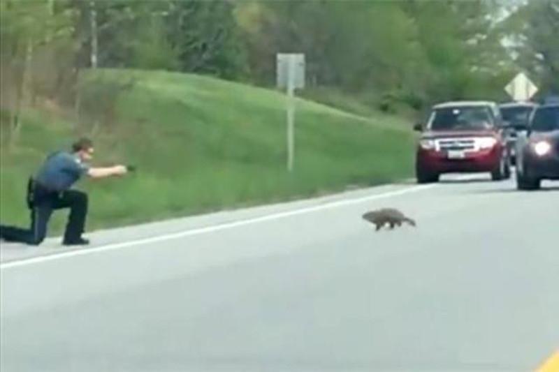 USA poliziotto-uccide-una-marmotta